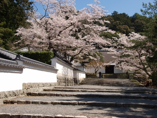 09桜 062 (538x404).jpg