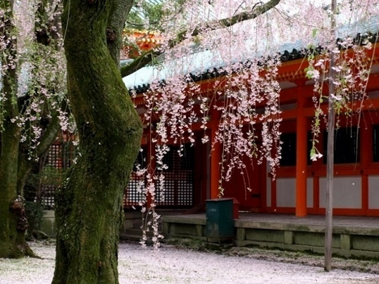 11-134 平安神宮 .jpg