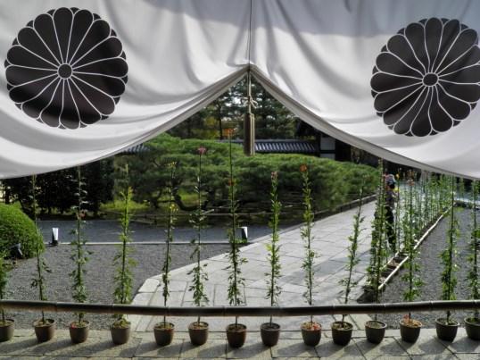 A13.11.02-71 大覚寺30.jpg