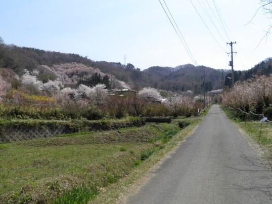 A14.04.16-11  花見山98.jpg