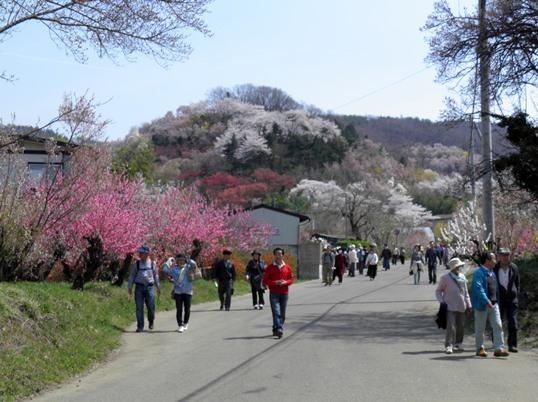 A14.04.16-11  花見山99.jpg